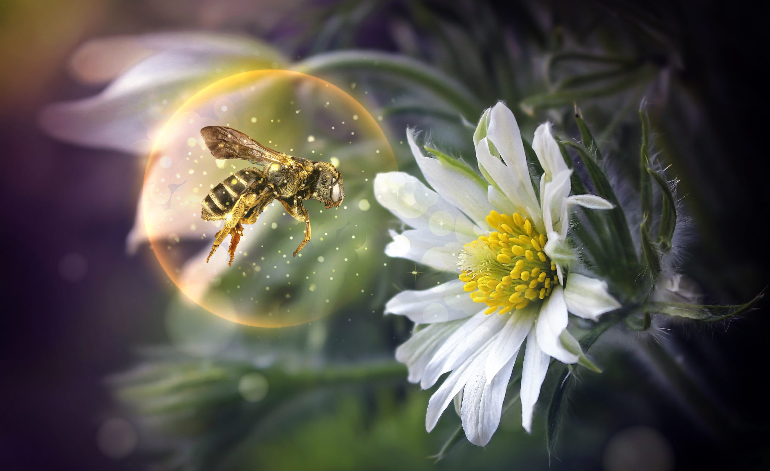 montage-abeille-bulle